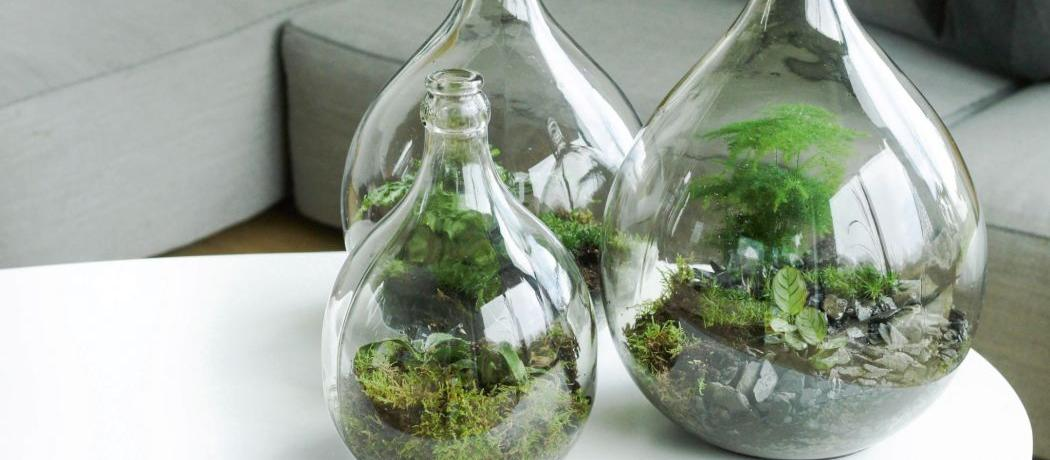 7 conseils pour r ussir son terrarium. Black Bedroom Furniture Sets. Home Design Ideas