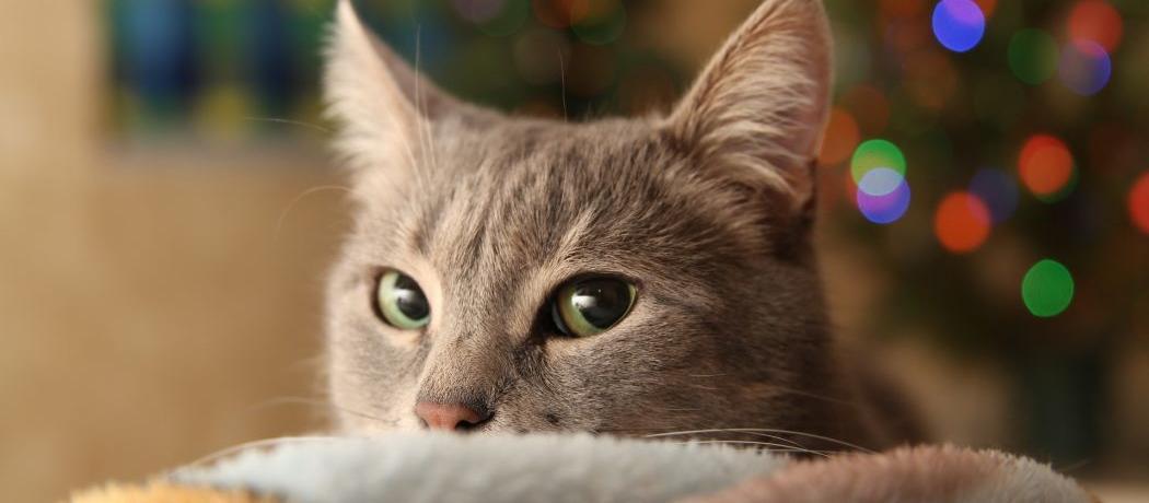 5 conseils pour prot ger son sapin de no l des griffes du chat. Black Bedroom Furniture Sets. Home Design Ideas