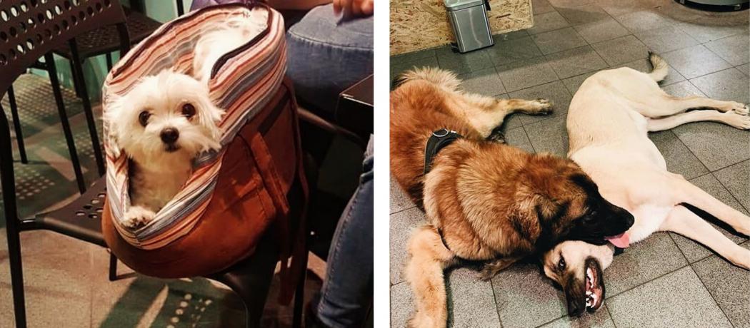 Paco and Co, le rendez-vous liégeois pour les amoureux des chiens