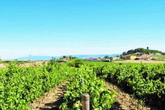 Connaissez vous les vins de Jerez ?