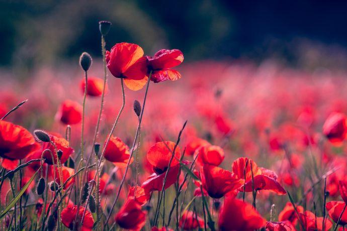5 fleurs à planter pour le printemps