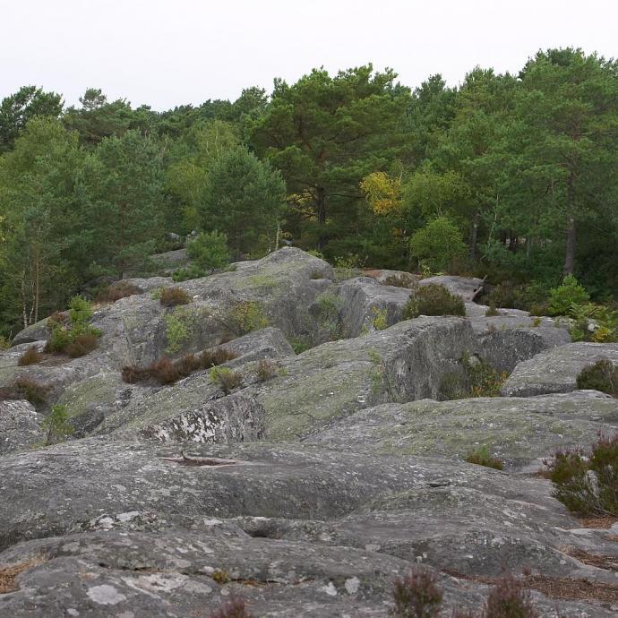 Fontainebleau: formé de centaines de blocs de grès dans la forêt, c'est une sorte de laboratoire, où on peut étudier et décortiquer un mouvement durant plusieurs jours.©Flickr - Kit Logan.
