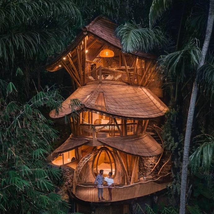 Perché dans les arbes à Bali.