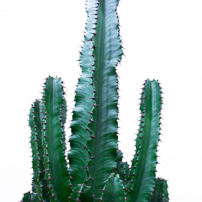 <strong>Au Mexique</strong> avec un joli cactus de JungleLab, prix sur demande. &nbsp;