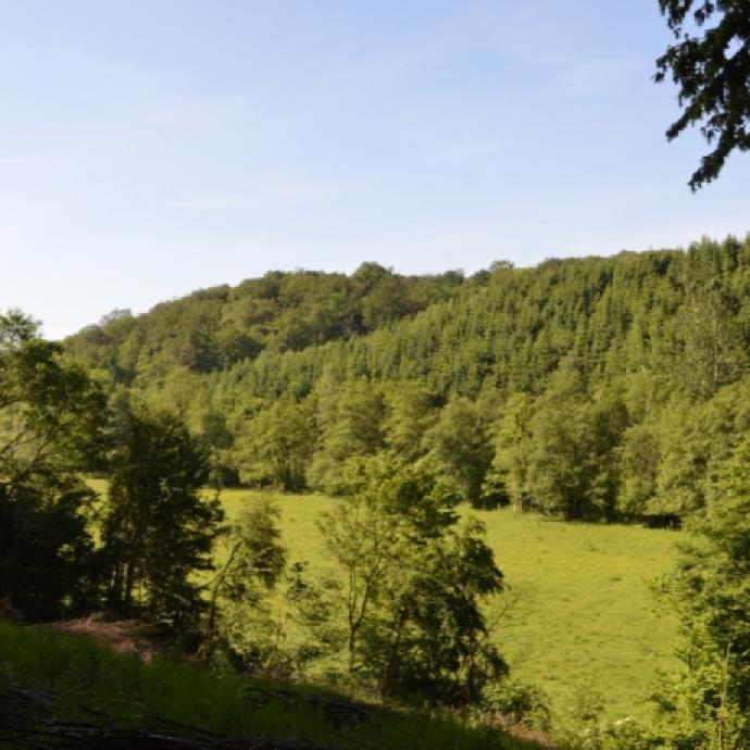 """Promenez-vous dans la réserve naturelle des «Prés d'Orval» dans la Province du Luxembourg. Du fait de ses terrains plats, cette promenade d'environ 1h est parfaite à faire en famille. / <a href=""""http://www.orval.be"""">www.orval.be</a>"""