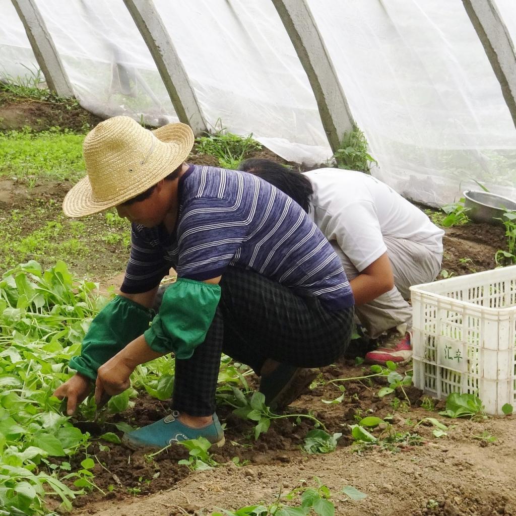 Tolérance au stress : 67 -Salaire annuel moyen : 101 620 $ -L'ingénieur agronome est un ingénieur mettant en œuvre les sciences et techniques de l'agronomie. Il exerce particulièrement des responsabilités d'expertise technique sur les mécanismes du vivant.<sub><em>Crédit photo : Pixabay/Jing</em></sub>