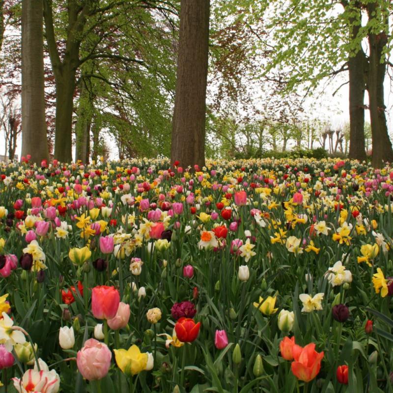 """Etendue sur les 14 hectares du parc du château de Grand-Bigard, c'est l'occasion de découvrir presque toutes les variétés de fleurs de printemps à bulbes dont 400 variétés de tulipes, des jacinthes ou encore des narcisses… Jusqu'au 6 mai 2018. <a href=""""http://www.floralia-brussels.be"""">www.floralia-brussels.be</a>"""